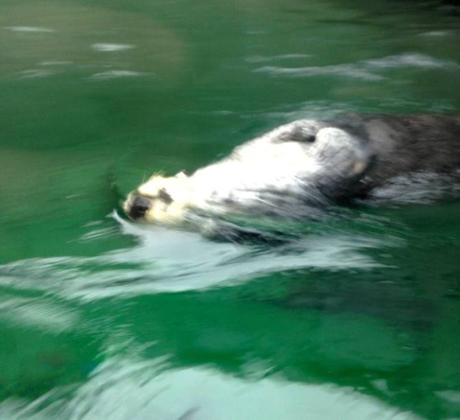 140324 In Layman's Terms (Seattle Aquarium)
