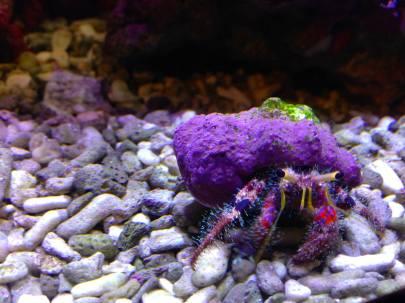 140324 Seattle Aquarium