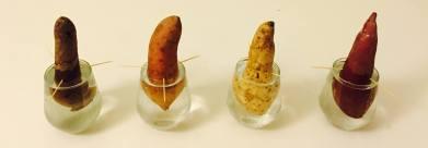160314 My Sweet Potatoes