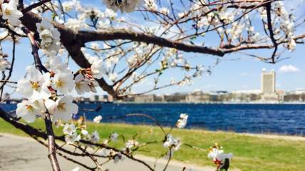 170418 Easter weekend (MIT)